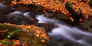 Bolu Ormanları