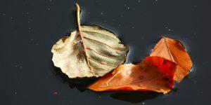 Bolu Doğası ve İklim