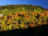 Yenice Ormanları