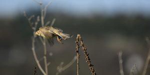 3 Ekim / Kuş Geçimi Fırtınası