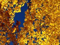 7 Ekim / Yaprak Dökümü Fırtınası