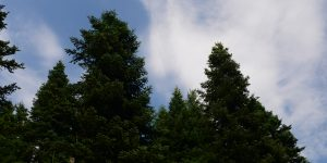 20 Ekim / Ağaç Dikme Zamanı