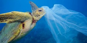 4 Ekim Dünya Hayvanları Koruma Günü'nde Daha Az Plastik Daha Çok Yaşam