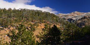 27 Kasım / Ağaçlara Su Yürüme Zamanı
