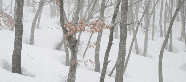 4 Aralık / Soğuk ve Yağmur