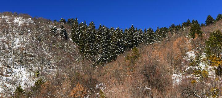 Sarıçiçek Dağı