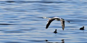 Kuşların Yeni Cenneti Kocaeli