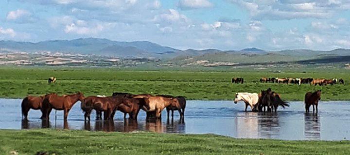 Sonsuz Huzur Ülkesi Moğolistan