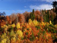 Yenice'nin Renklerine Yolculuk