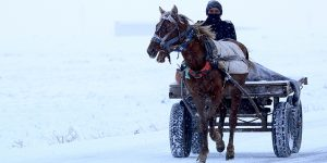 Çocuk, Eşek ve Kış Yaşamı