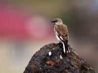 Diyadin'in Bahar Kuşları